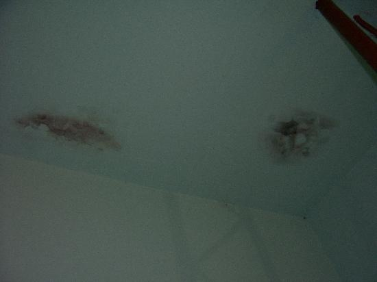 Alicia's Guest House: Mold