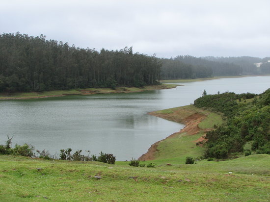 Ooty, India: Cool Landscape
