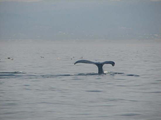 Randy's Fishing Trips and Whale Watching Trips