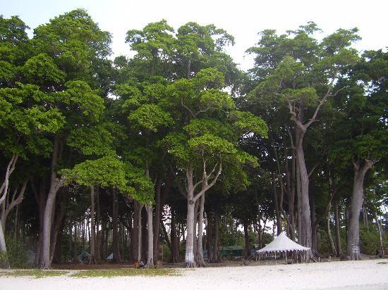 Havelock Island, Hindistan: asia's best radhanagar beach