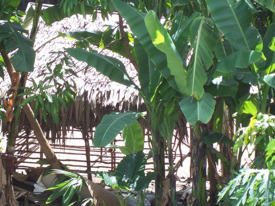 Rambutan Resort - Siem Reap: the neighbours