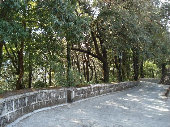The Claridges Nabha Residence, Mussoorie: Hotel driveway