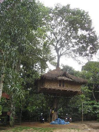 Wayanad Blooms: And the Tree House