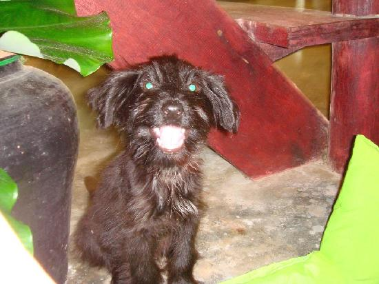 Time For Lime Bungalows: Puppie