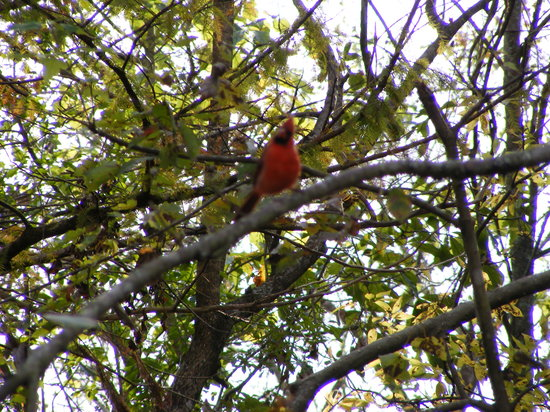 Lake Fausse Point State Park : Great bird watching!!