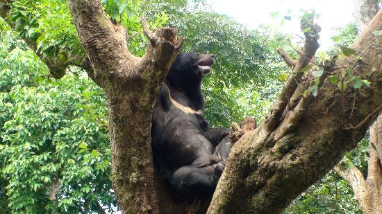 Nehru Park : Bear
