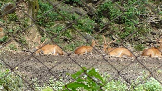 Nehru Park : deer