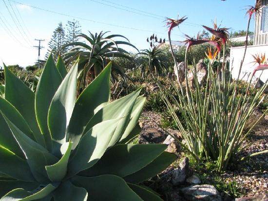 View43 & Citylights: Gorgeous Gardens