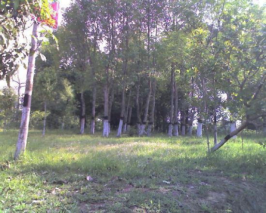 Agartala, India: Aagar plantation at Sepahijala