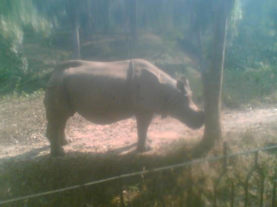 Agartala, India: Wild Life Sanctuary , Sepahijala