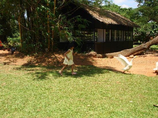 Vivanta by Taj - Kumarakom: Kids playing with ducks on the resort ground