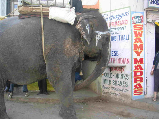 An elephant on the road, at shirdi