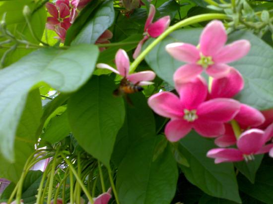 Manipal, India: Again The Flowers