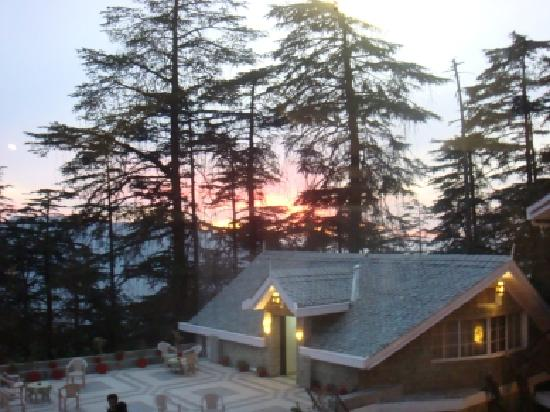 A  morning glory at Shimla