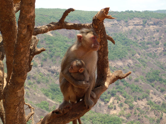 Mahabaleshwar, Indien: Monkey Point ...?