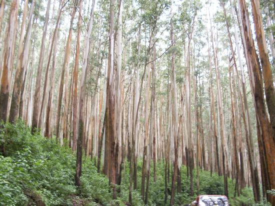 Beautiful trees on the way of ooty