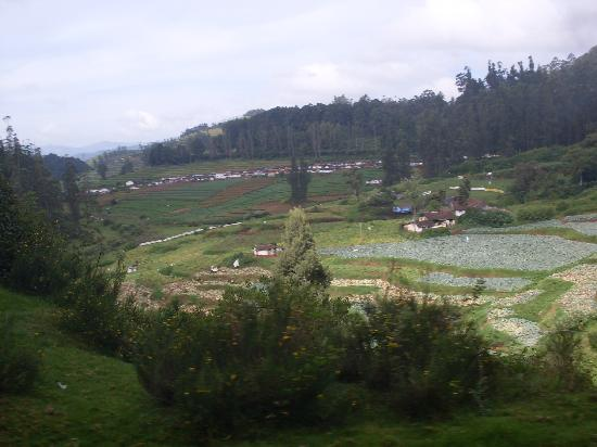 ooty - a train view