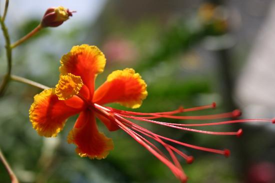 Casa de Kathy: Flowers in Kathy's backyard