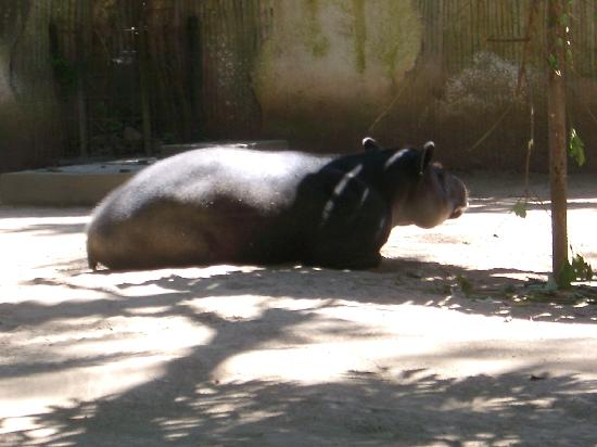 La Aurora Zoo: Hippo