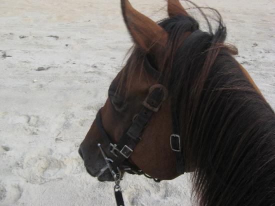Bilde fra Equine Adventures