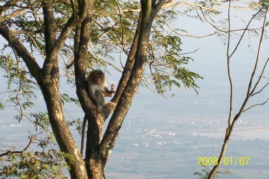 Nandi Hills: Enjoy their company