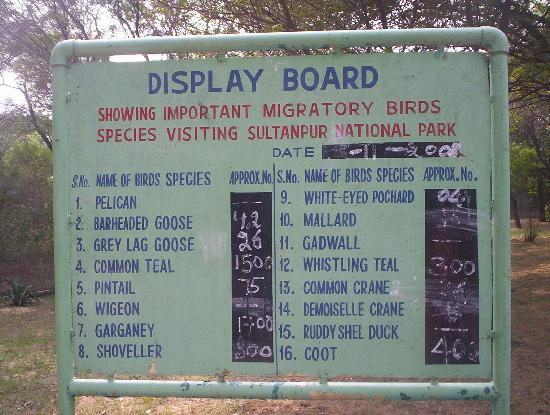 Sultanpur National Park Bird Sanctuary: Migratpry Bird count on 13th November 08