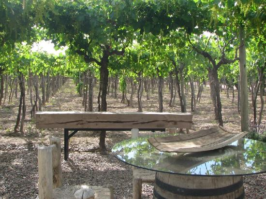 Conalbi Grinberg Casa Vinicola: Wine and dine under the vines