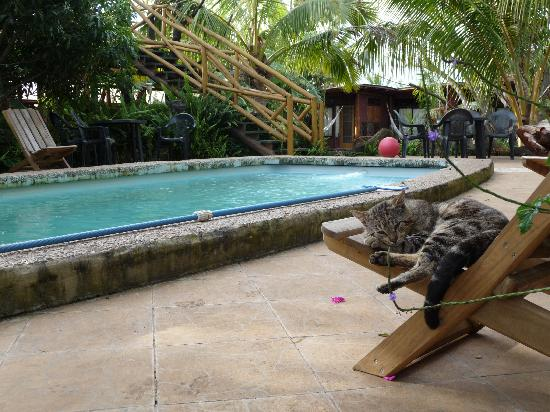 Hotel Manavai: Pool area