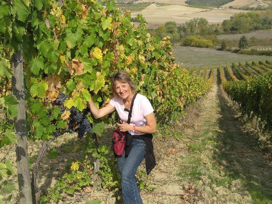 Walk About Tuscany Tours: Amazing grapes