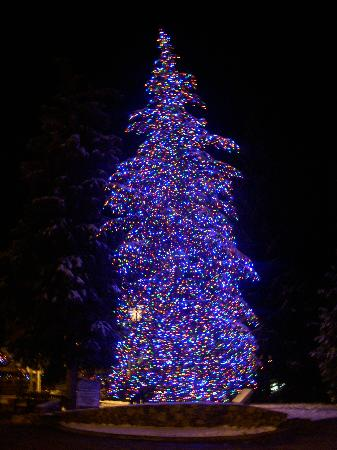 Antlers at Vail: Christmas tree in Vail Village