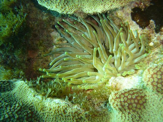 Portobelo Beach: under water