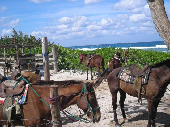 West Bay, Gran Caimán: Pampered Ponies - home sweet home