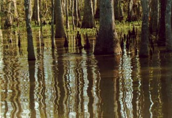 Houma, LA: Swamps and Marshes