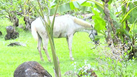 The River House: when we were there, the neighbors horse came in for a banana snack