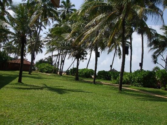 Ranweli Holiday Village: The garden