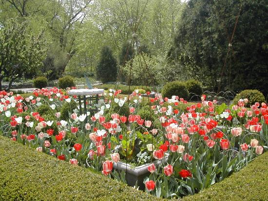Tulip Season At Olbrich Botanical Gardens