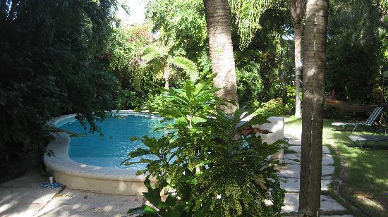 Siboney Beach Club: pool and garden area