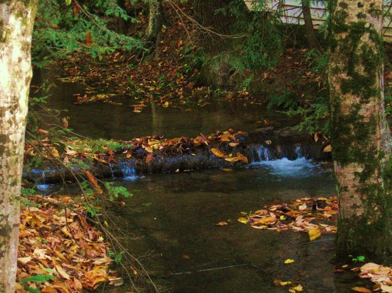 Another Beautiful Stream in Pigeon Forge, TN