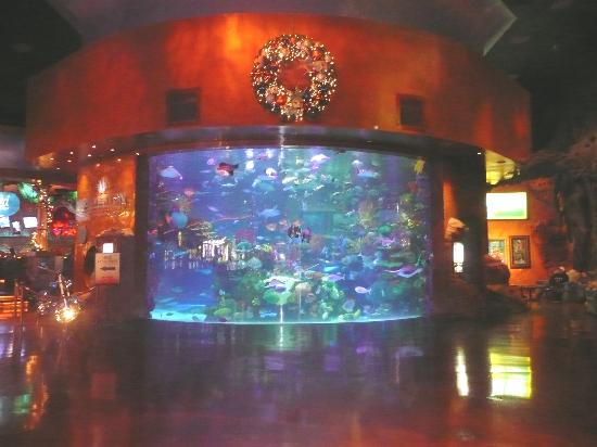 The aquarium in the lobby shows much smaller than it for Fish store las vegas