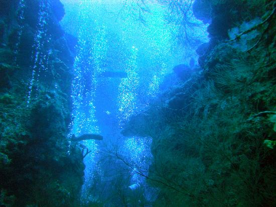 Anthony's Key Resort: cavern