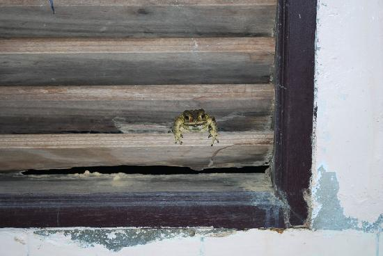 Bamboo Bay Resort: The window through which the toads entered!