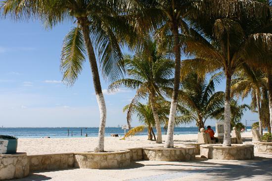 Hotel Las Palmas: The beach near downtown
