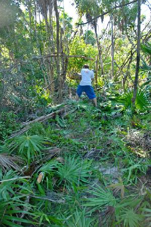 Bacalar Chico National Park and Marine Reserve: Trail building in earnest