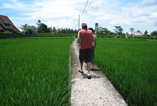 Nick's Hidden Cottages: rice paddies front of hotel