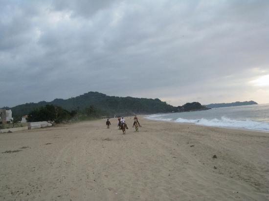 Inn At San Pancho Home Of The Gatagorda Horseback Riding On Beach