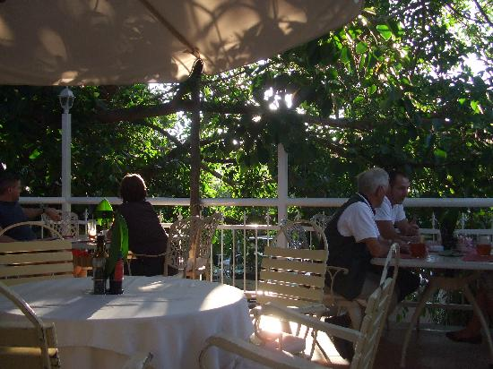 Cafe Balalaika: The Terrace under Windhoek's Largest Rubber Tree