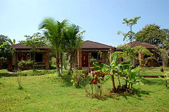 Jinnie's Place: The Bungalows surrounded by tropical garden