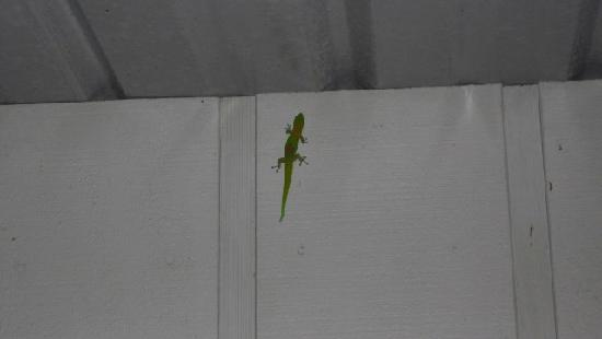 Silver Oaks Ranch: The Island is covered with cute little Geckos.  This one visited us one night on the porch!