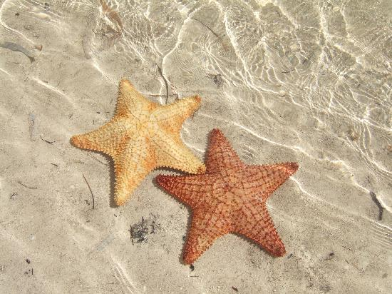 Hotel Maya Luna: living starfish at my feet