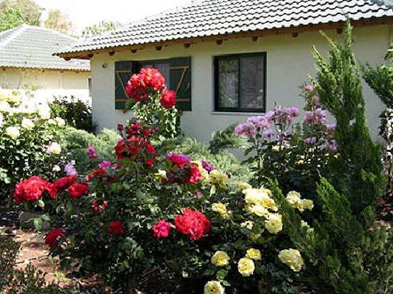 Etsel Amira Ve George: flowers and trees
